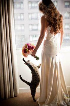 kocie wesele, koty na ślubie, koty jako motyw przewodni ślubu i wesela 16