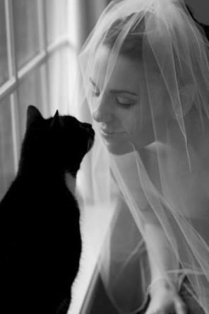 kocie wesele, koty na ślubie, koty jako motyw przewodni ślubu i wesela 1