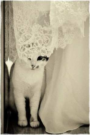kocie wesele, koty na ślubie, koty jako motyw przewodni ślubu i wesela 14