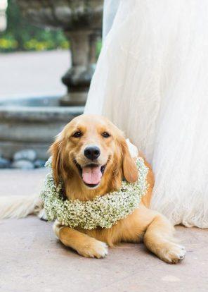 gipsowka-motyw-przewodni-slub-wesele-wianek-dla-psa